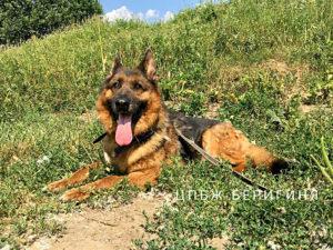 Собака Балта приют Беригиня