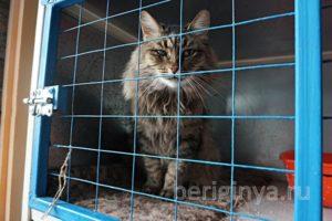 Кошка Эми приют Беригиня