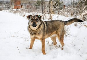Собака Лютик приют Беригиня